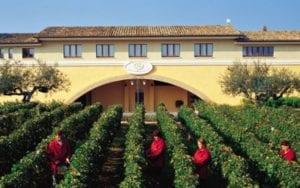 Free Wine Tasting - Marramiero Winery @ <br><br>CuVino Trattoria Pizza Enoteca