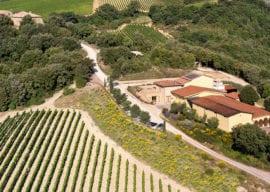 Wine Tasting-Mastrojanni in Montalcino