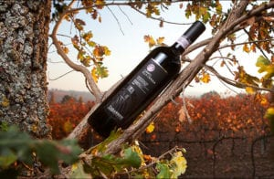 Wine Tasting-Tabarrini Winery @ <br><br>CuVinoTrattoria Pizza Enoteca