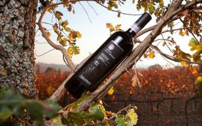 2019-02-25 Wine Tasting-Tabarrini Winery
