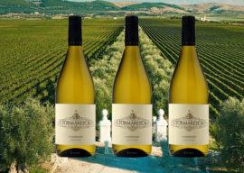 2021-04-28 thru 05-4 Wine Special – Tormaresca Chardonnay